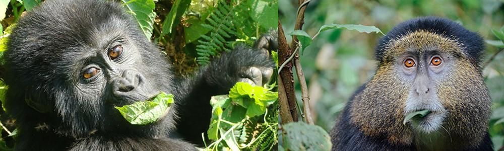 4 Days Rwanda Gorilla Safaris