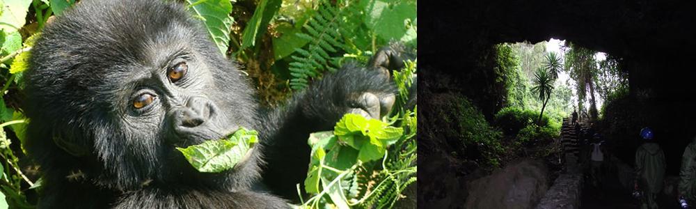 3 Days Rwanda Gorilla Trek and Musanze caves
