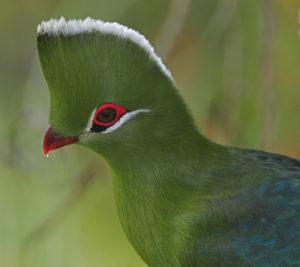 Akagera National Park - Birding
