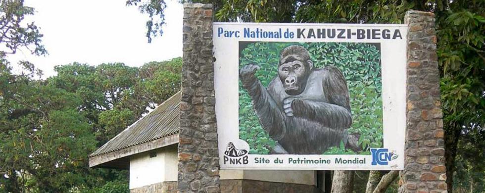 5 day Congo Gorilla Tracking