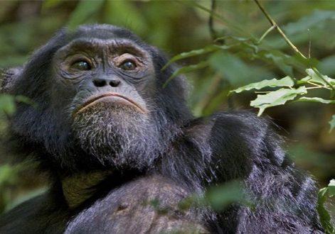 6 Day Rwanda Safari Tour