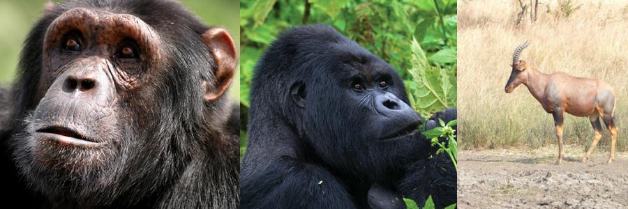 rwanda-gorilla-treks - 7 days Rwanda tour
